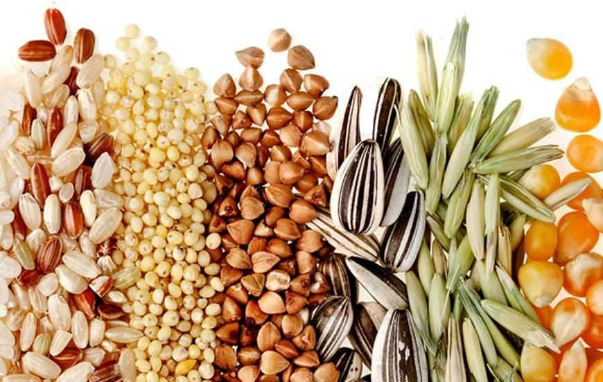 Cereali per celiaci